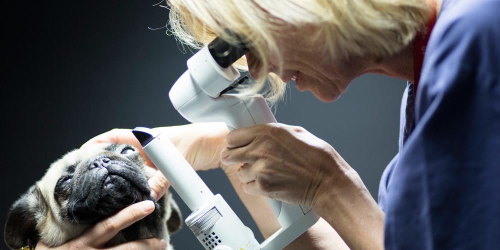 Øjenlysning Anicura Aarhus Dyrehospital