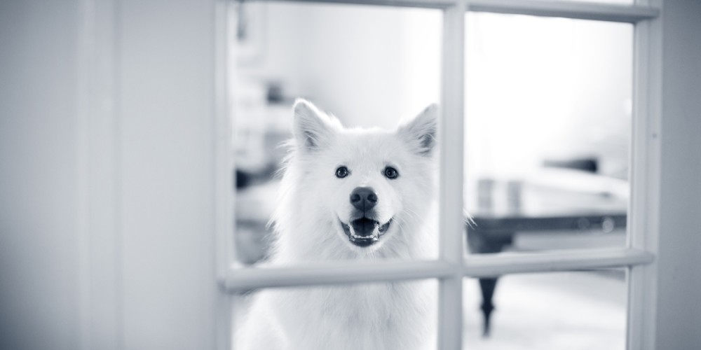 hond tanden