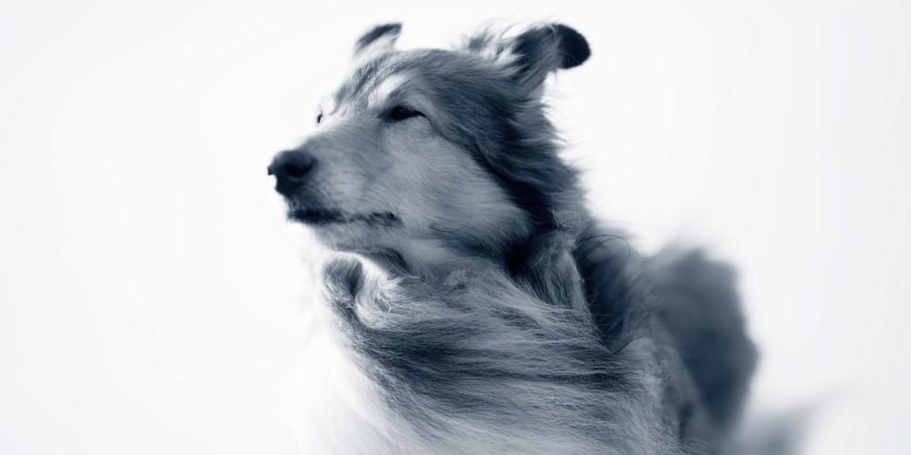 Soorten vacht bij hond en verzorging