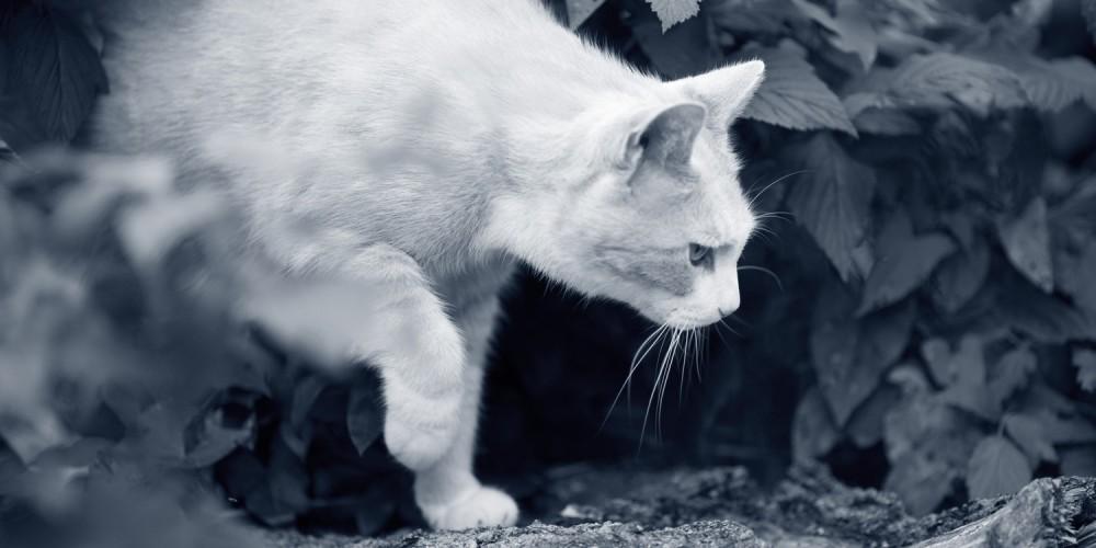 kat buiten