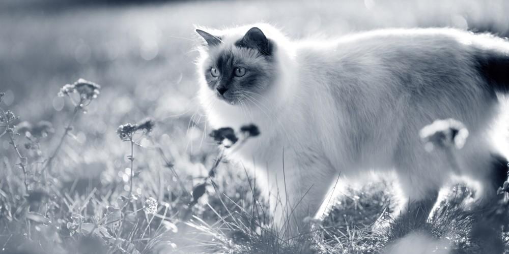 kat bloemen