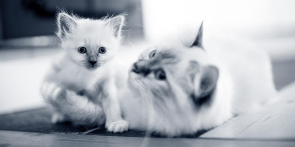 poes en kitten