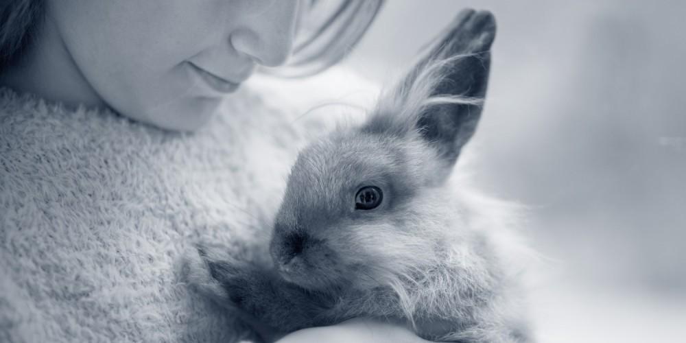 konijn knuffel