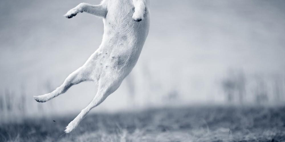 Onderbuik hond