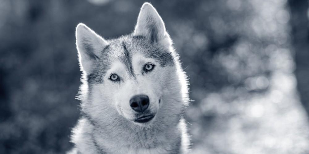 vachtmijt hond