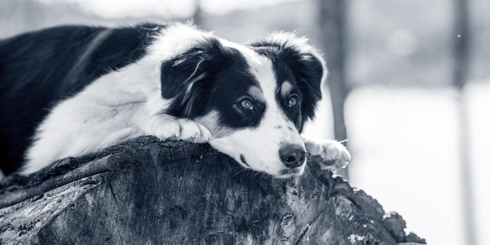 Dierenarts Barendrecht Gouwe hond