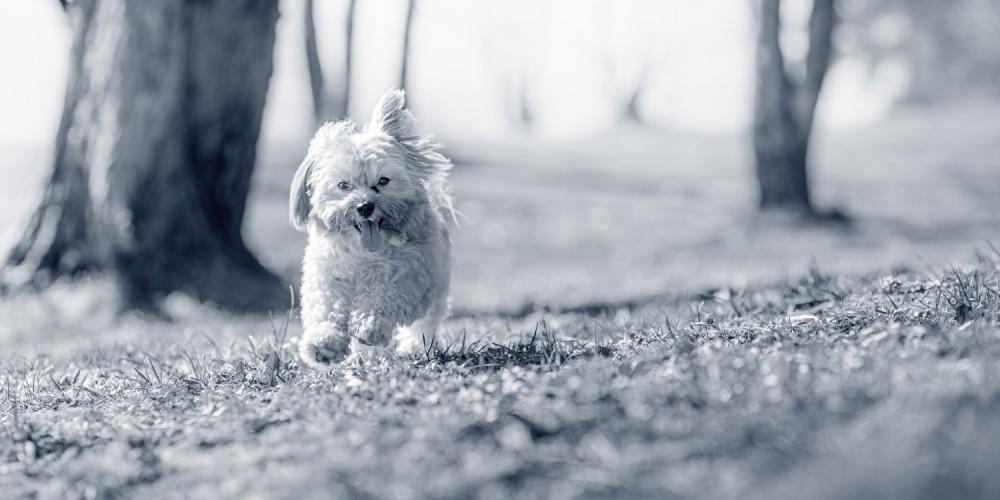 Puppy in weiland