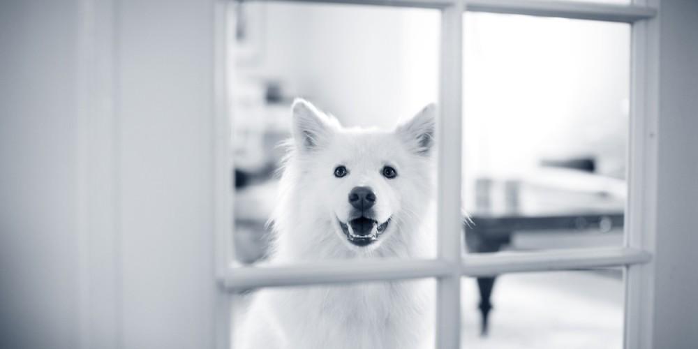 beugel hond
