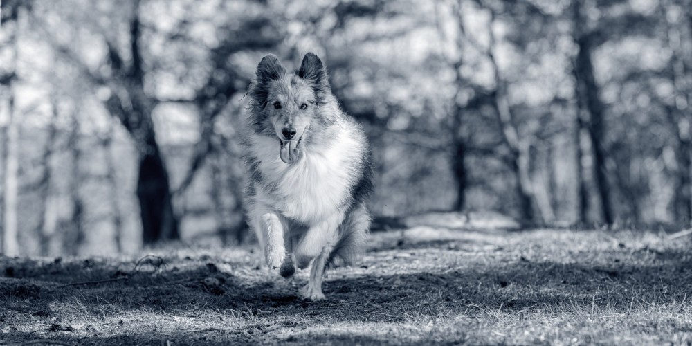 AniCura Baarn Hond kat