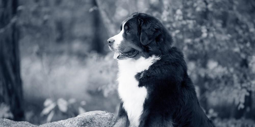 hond hotspot