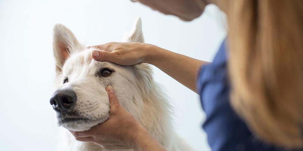 oogonderzoek hond