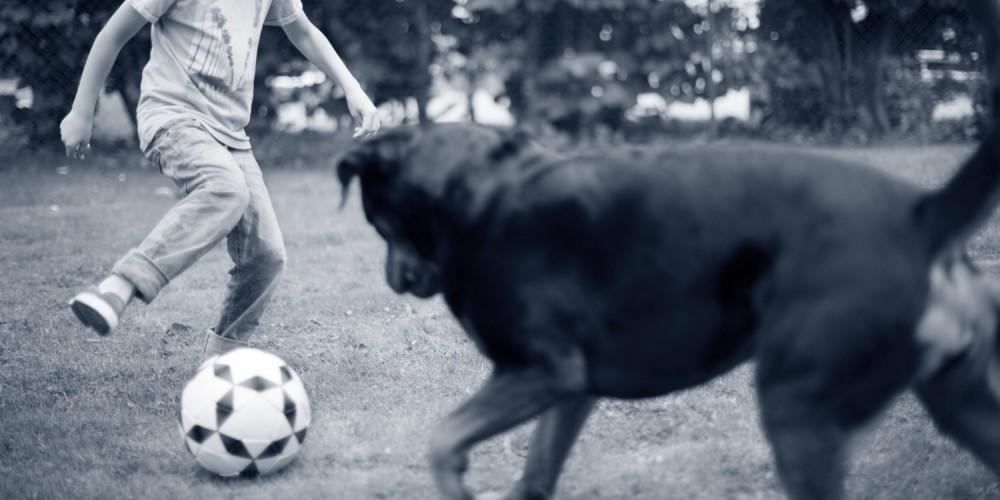 Bewegende en spelende hond