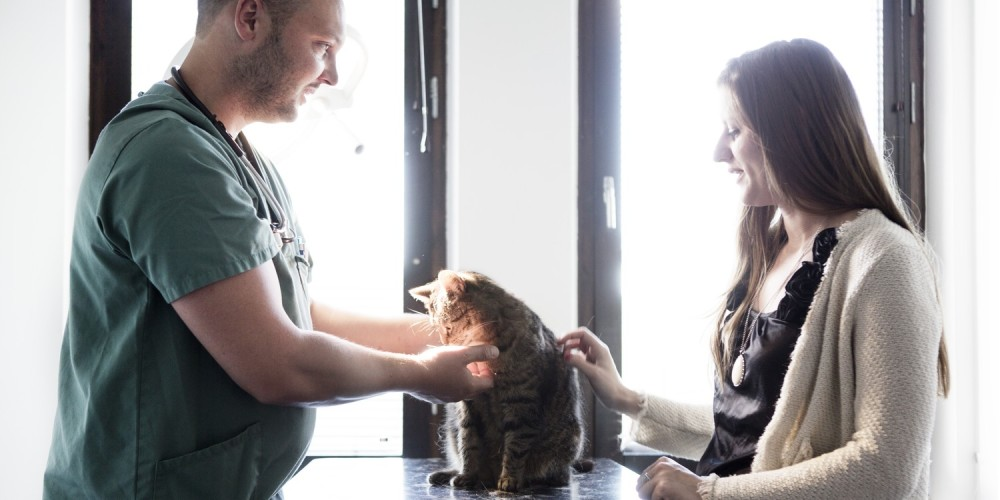 Kat in armen
