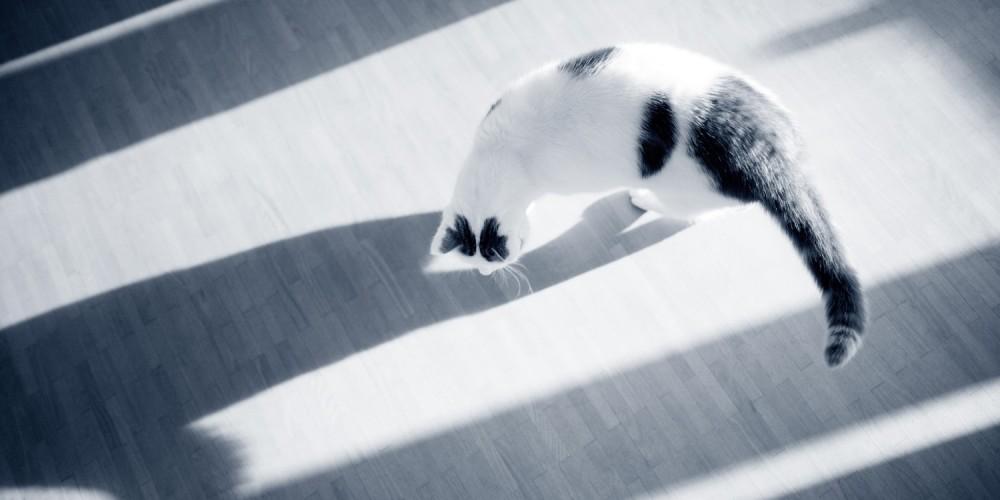 voedselovergevoeligheid kat
