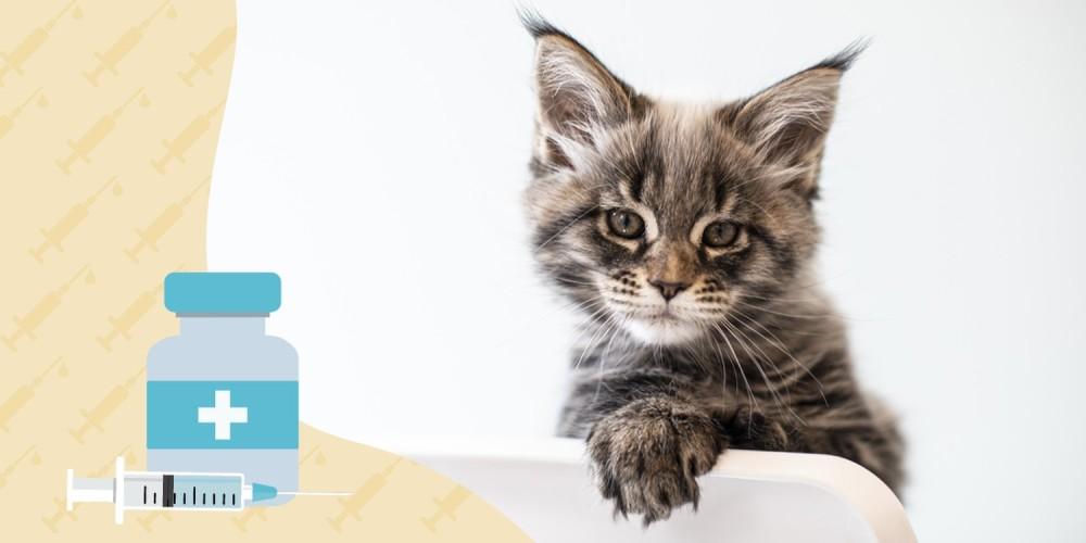 kat met suikerziekte