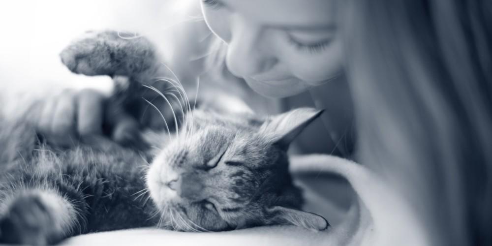 knuffelen kat