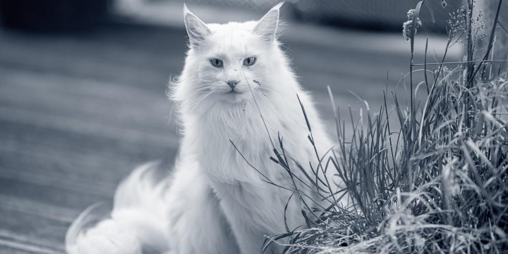 Kat buiten op het terras