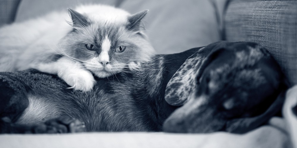 Hond en kat samen slapen