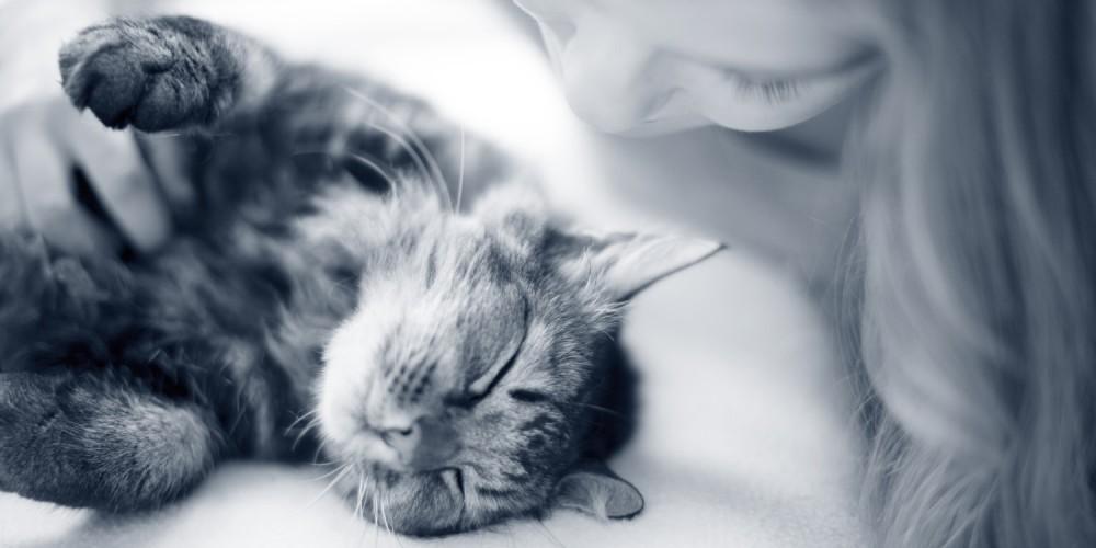 kat op rug