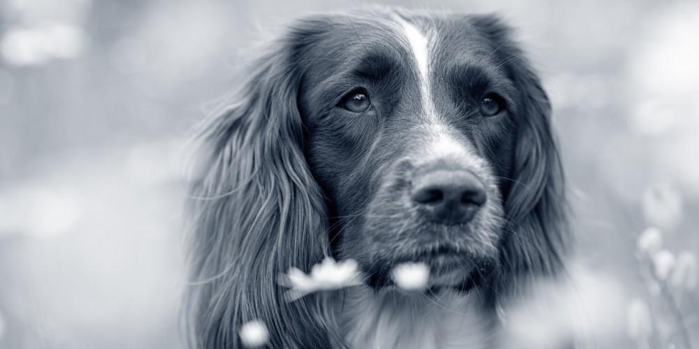 hond onderzocht