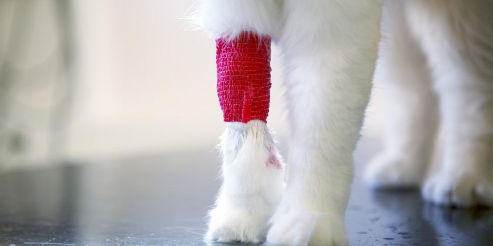 verbonden poot kat