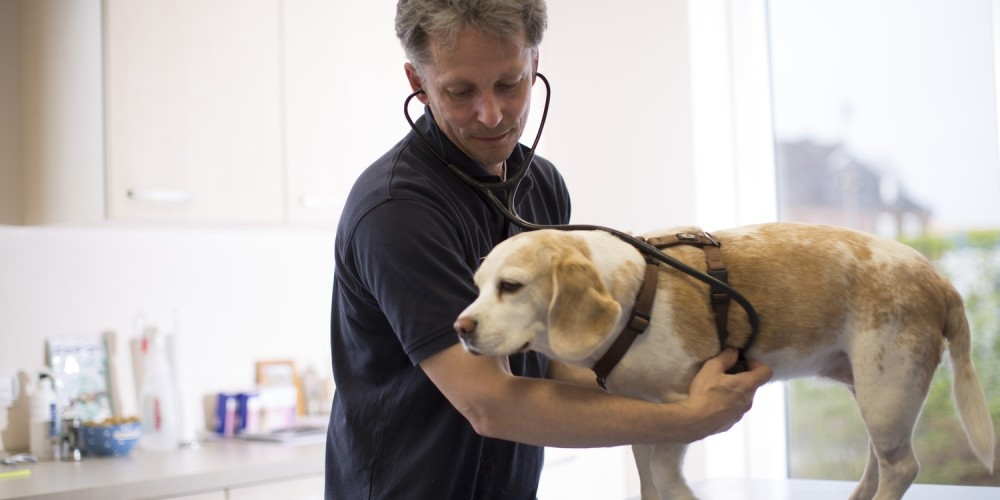hond onderzoek