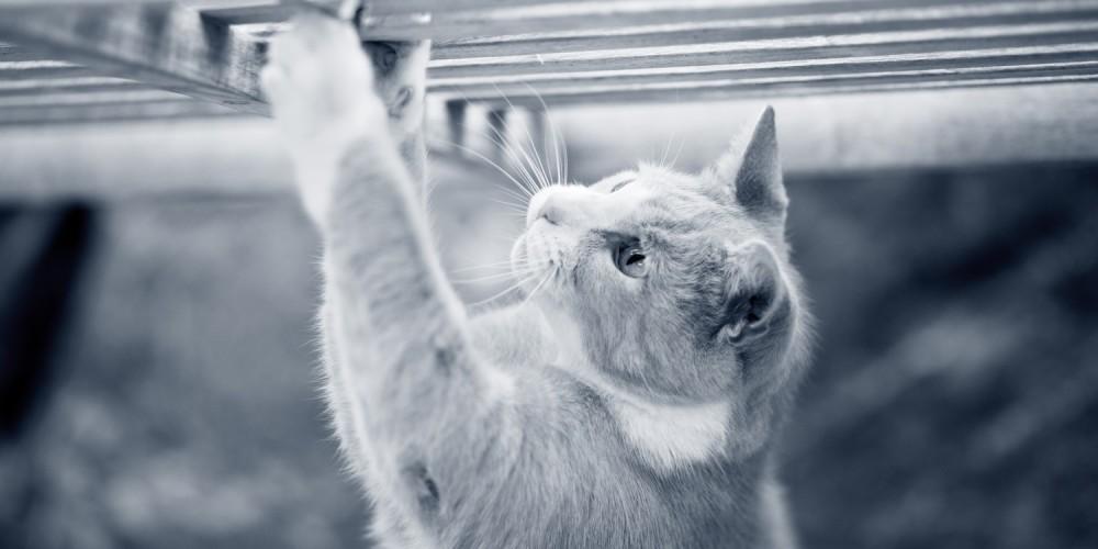 kat klimmen
