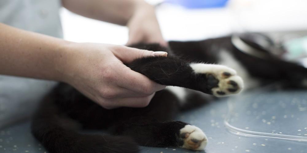 orthopedie huisdier