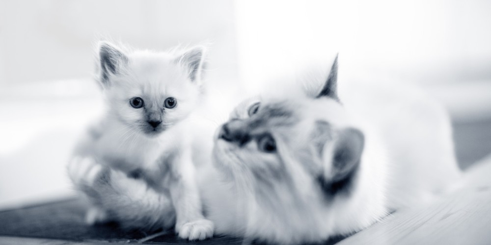 moederkat met kitten