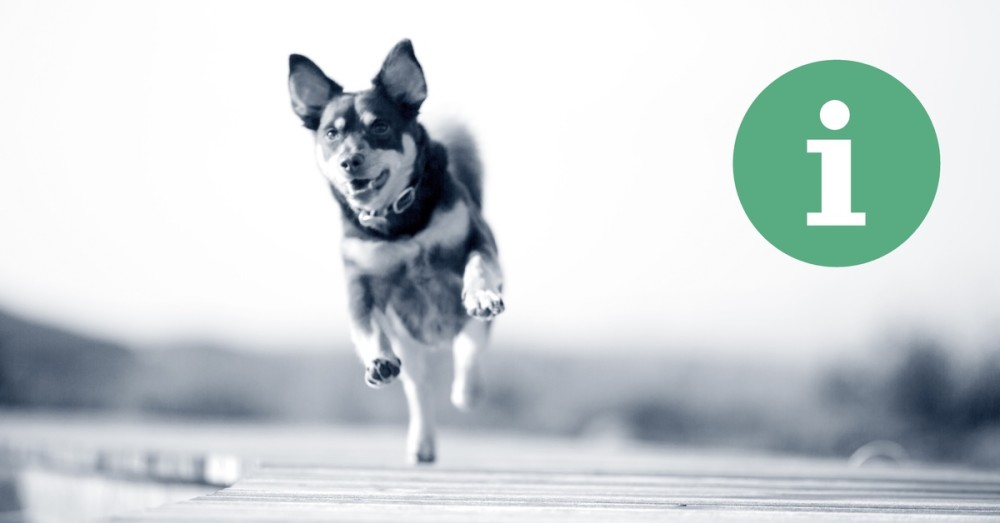 Hond op de weg informatie