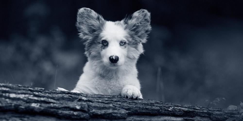problemen oog hond