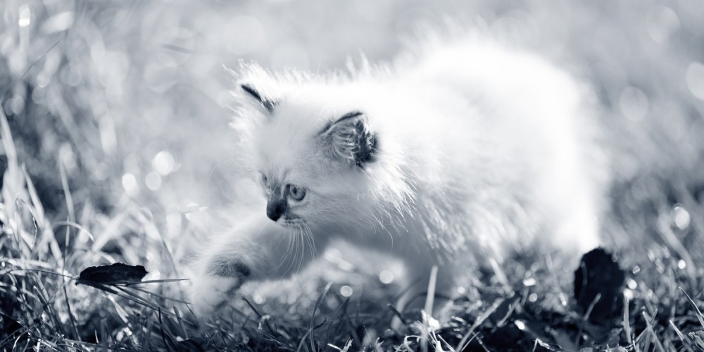 kitten in gras