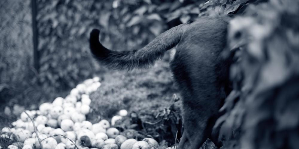 tussenteenontsteking hond in de bosjes