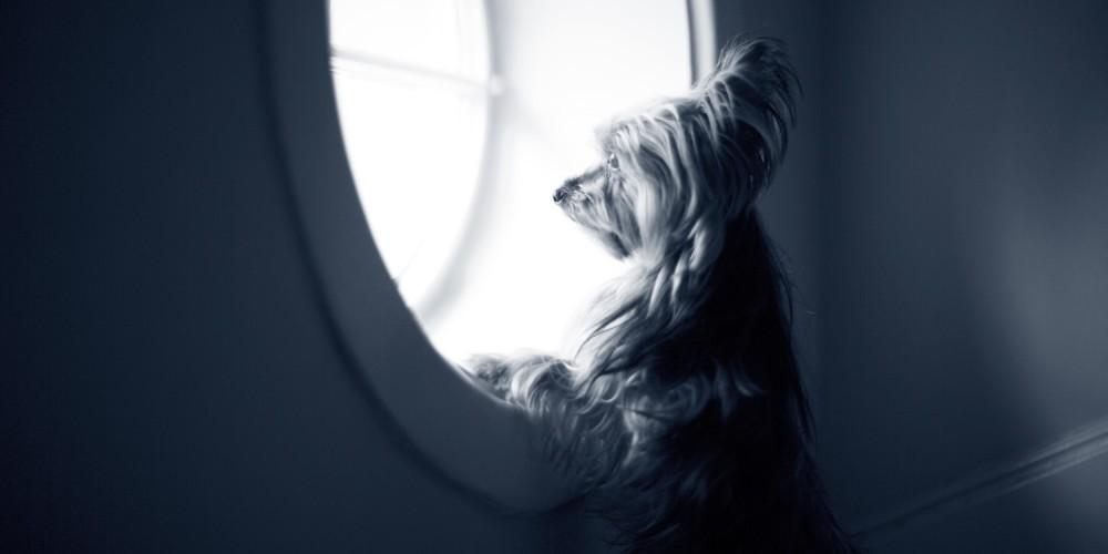 hond bij raam
