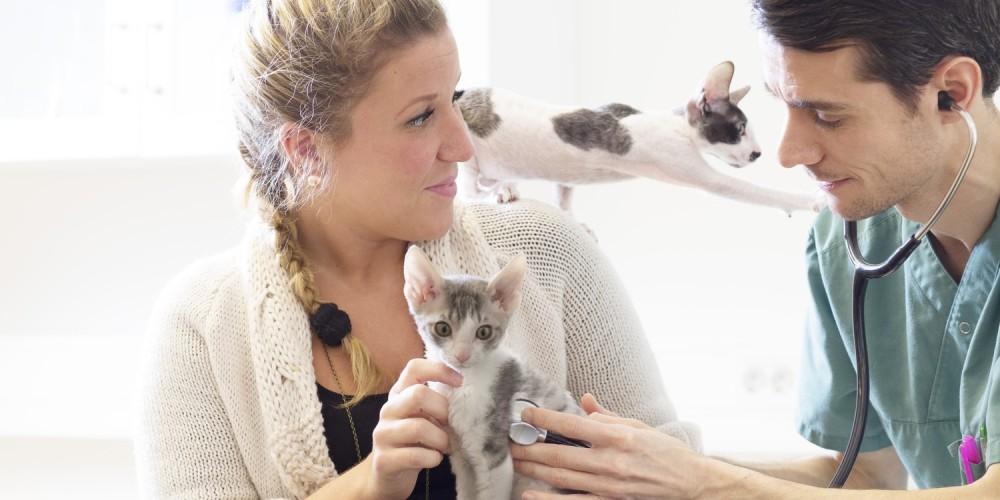 onderzoek kittens