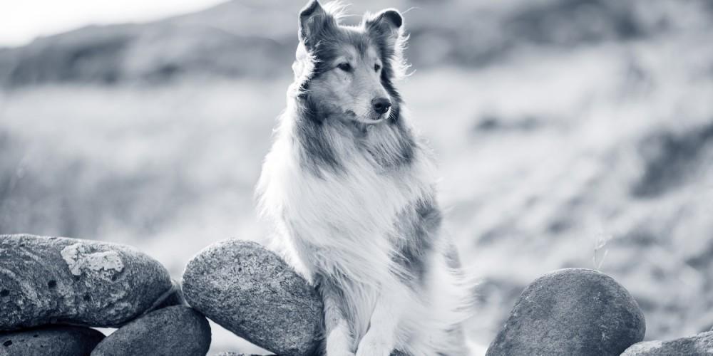 Uw hond ontwormen is belangrijk voor zijn gezondheid.
