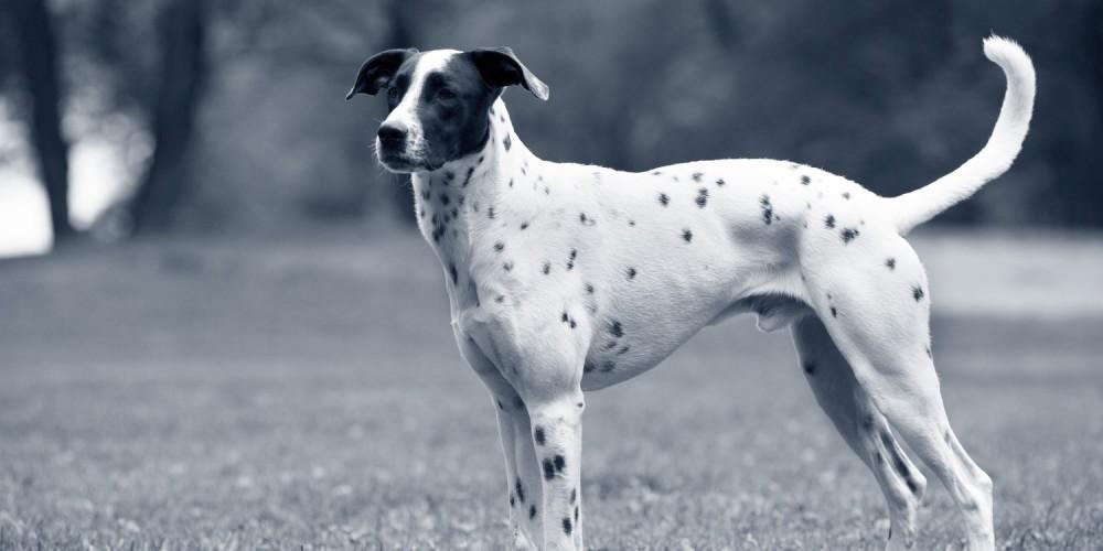 Urine opvangen hond