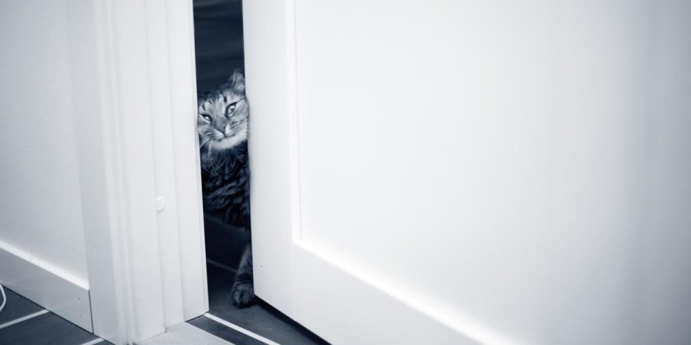 kat tussen de deur