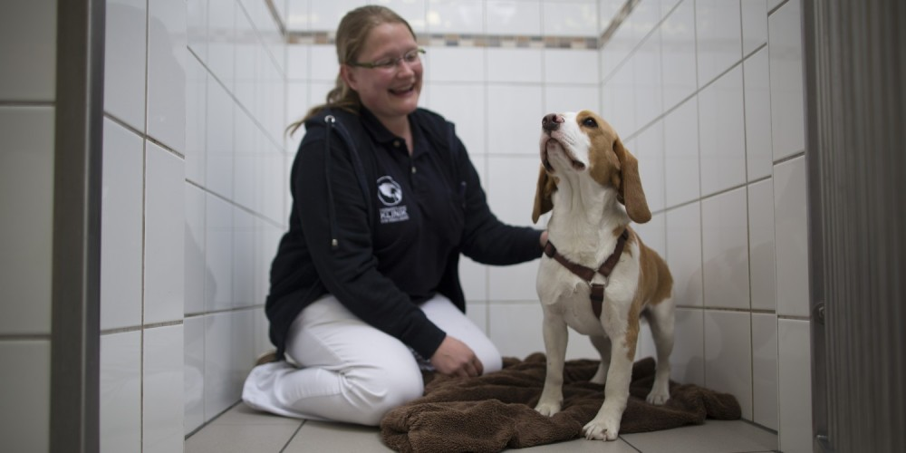 hond in kennel