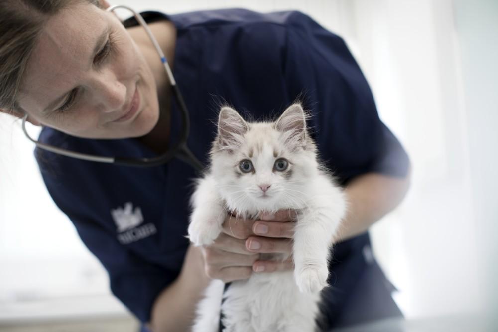 kat dierenarts