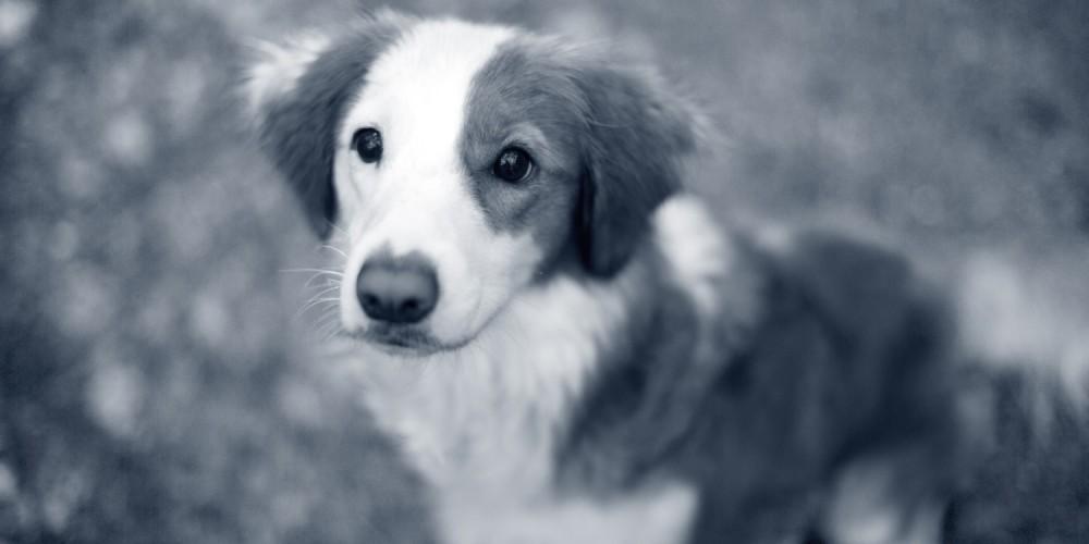 puppy vacht