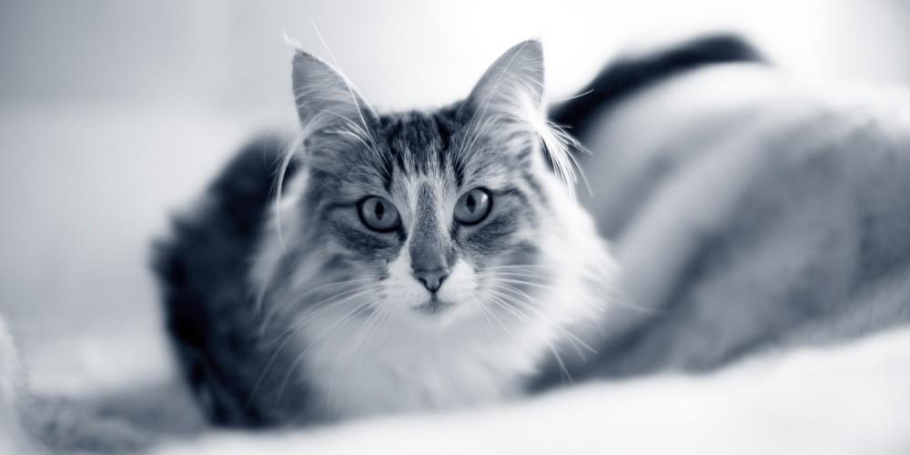 kat op bed