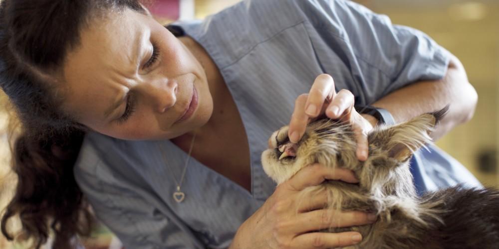 maanden van het gebit dierenkliniek Sleeuwijk