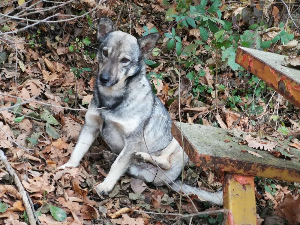 Hond Found