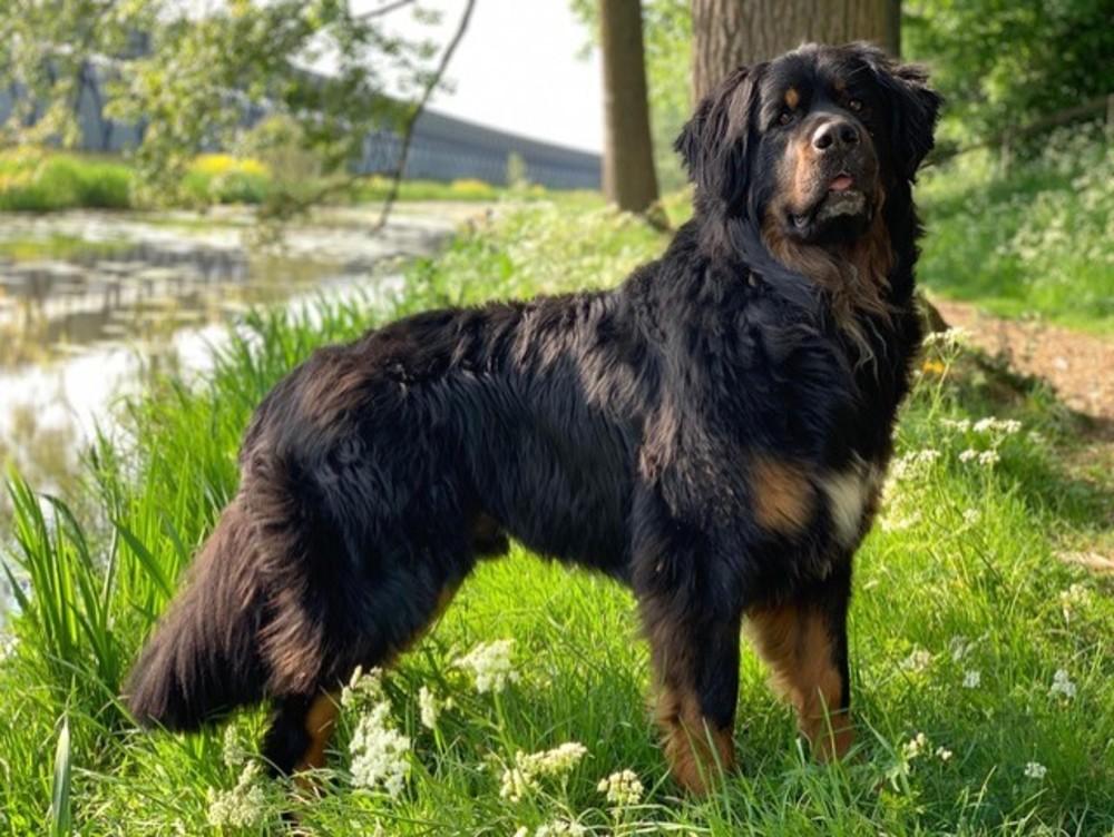 Hond Marnix