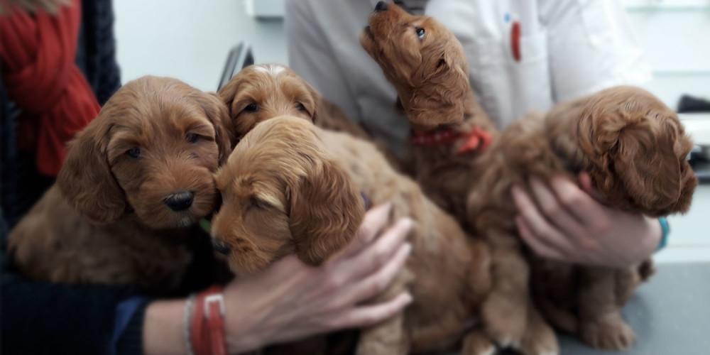 puppies bij de dierenarts