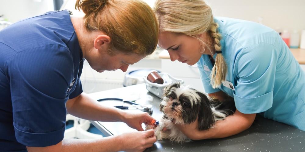 hond gezondheidscontrole