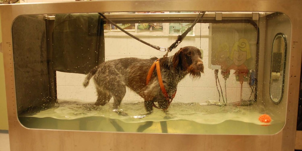 Hydrotherapie hond