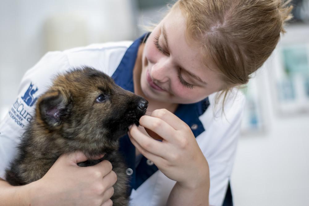 Stagiair met puppy