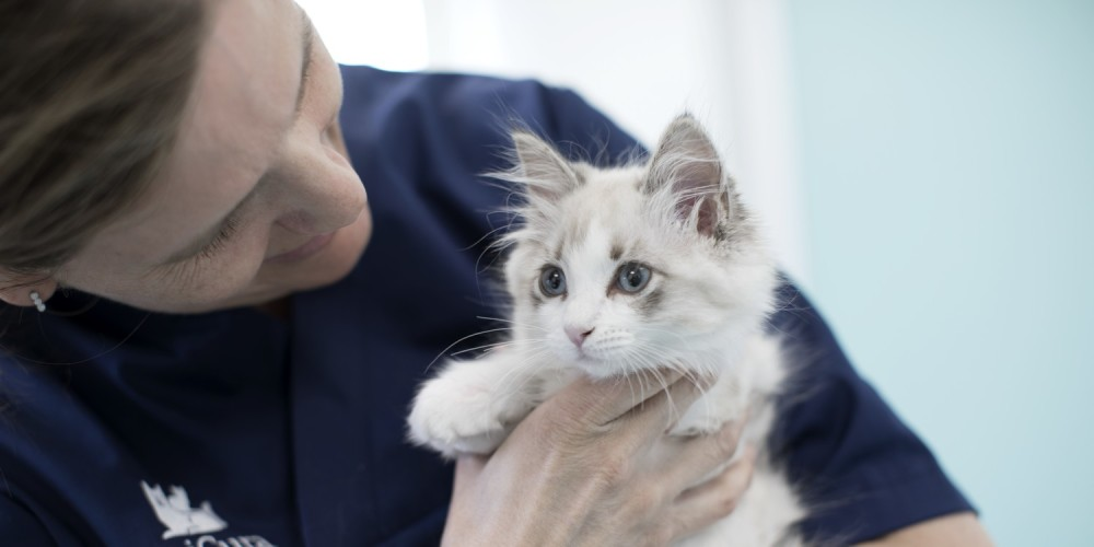 dierenarts kitten